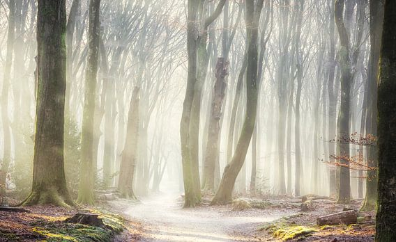 Wonderland bos van Fabrizio Micciche