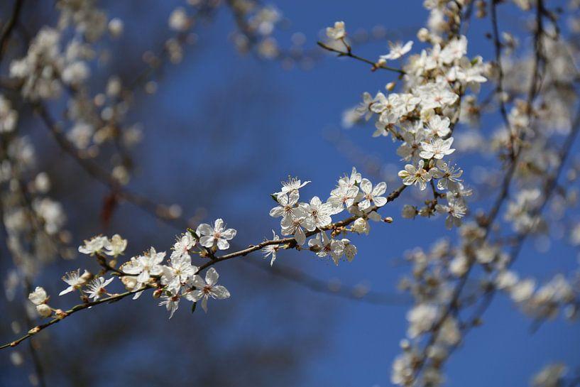 Kleine witte bloesem van Rianne Fotografeert