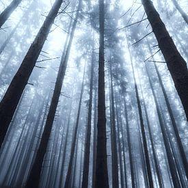 Silhouetten eines Waldes im Nebel von Deimel Fotografie