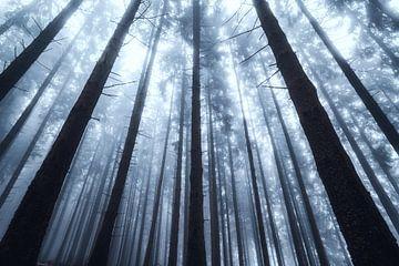Silhouetten eines Waldes im Nebel