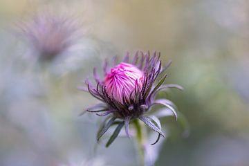 rosa und violette Sommerpracht von Tania Perneel