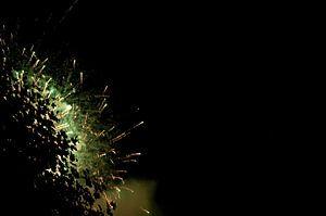 Abstracte bos vuurwerk