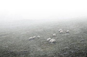 Schapen in de mist met sneeuw von Herman van Ommen