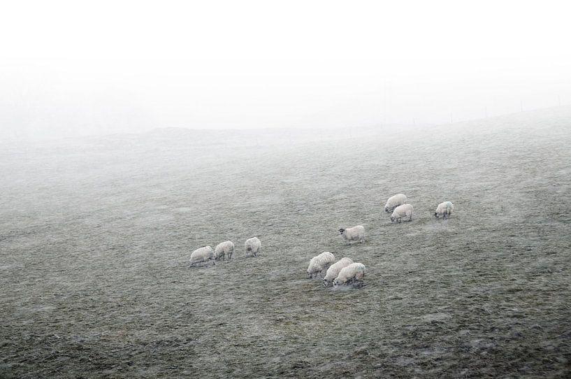 Schapen in de mist met sneeuw van Herman van Ommen