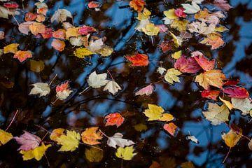 Herfst schildert zelf van