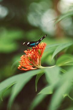 Vlinder op bloem van Veri Gutte
