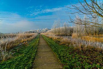 Polderlandschap van Ivo de Rooij