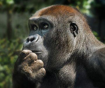 Gorilla : Ouwehands Dierenpark von Loek Lobel