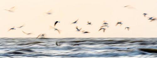 Gulls von Richard Guijt