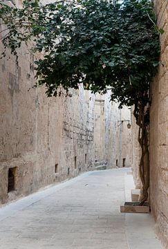 straatje in mdina op  het eiland malta van Compuinfoto .