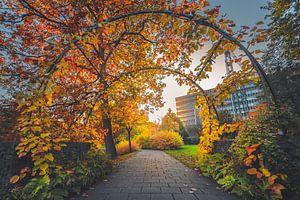 Utrecht botanical gardens van