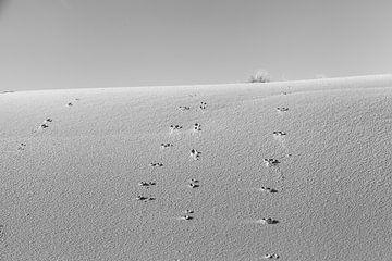 Sporen in het zand van DuFrank Images
