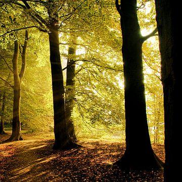 Trees von