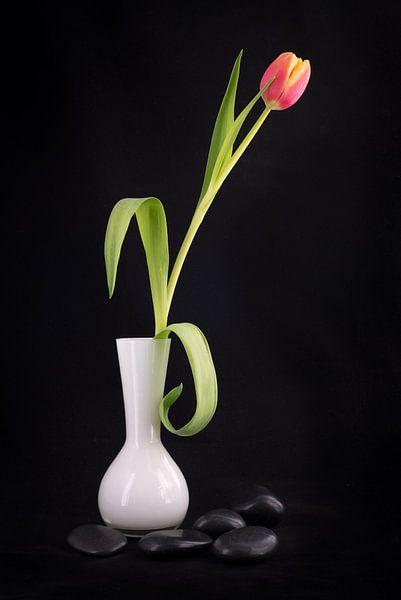 Tulp in een witte vaas met zwarte kiezelstenen van Pascal Raymond Dorland
