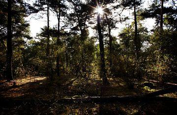 Loonse en Drunense Duinen von Christiaan Krouwels
