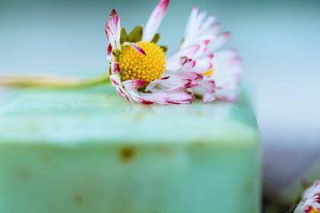 duftende Naturseife und Gänseblümchen von Martina Weidner