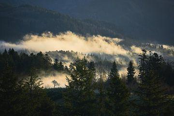 Mistige ochtend in het Zwarte Woud van Max Schiefele