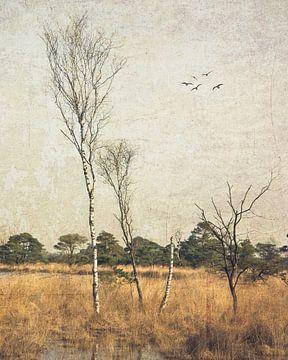Turnhout ven von Patrick Reinquin