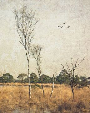 Turnhouts ven van Patrick Reinquin