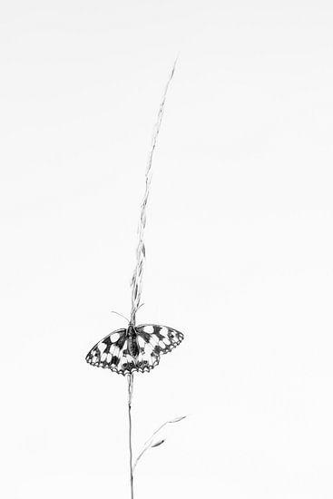 Dambordje in zwart wit van Judith Borremans