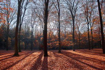 Herfst kleuren in tegenlicht van Ad Jekel
