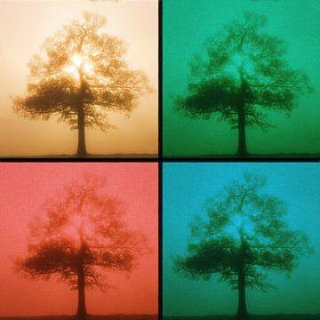 Einsamer Baum in vier Jahreszeiten von Maurice Dawson