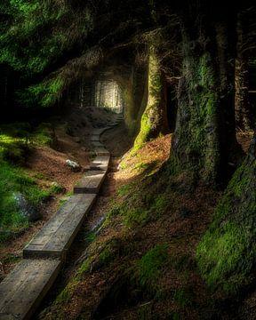 chemin vers la lumière sur Markus Stauffer