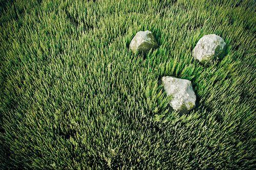 Basalt op bedje van Zeekraal
