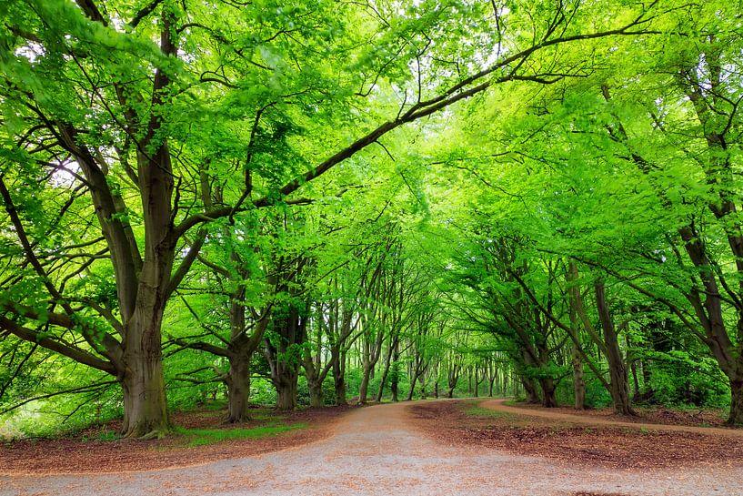 Amsterdamse bos in de lente van Dennis van de Water