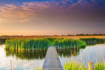 Natuurgebied de Groene Jonker von Catching Colors