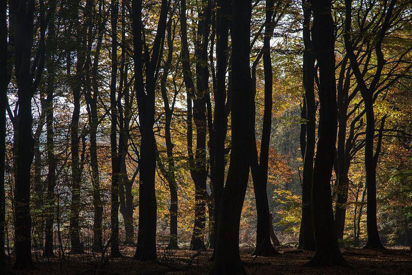 silhouetten in de herfst van Contrast inBeeld