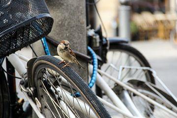 vogel in de stad von Erik Koks