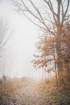 Märchenhafte Atmosphäre im Wald von Petra Brouwer