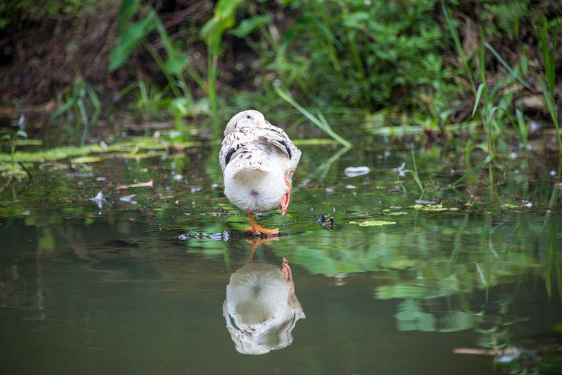 Bird on water van Bram de Muijnck