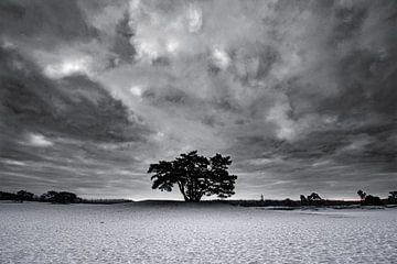 Minimalistisch zwart-wit boom op de Soesterduinen van Rowan van der Waal