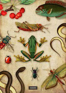 Tropische schoolplaat met reptielen en insecten van