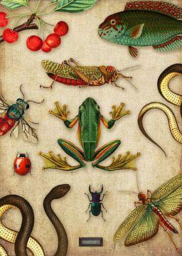 Tropische schoolplaat met reptielen en insecten van Studio POPPY