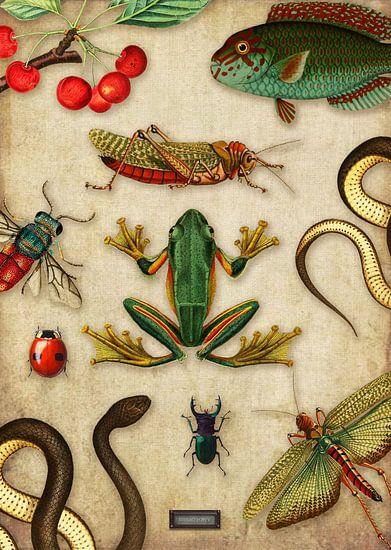 Tropische schoolplaat met reptielen en insecten von Studio POPPY