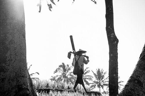 Rijstveld werker