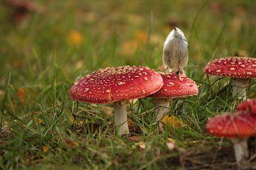 Tabourets de crapaud et mésanges à queue en automne sur Heike Hultsch