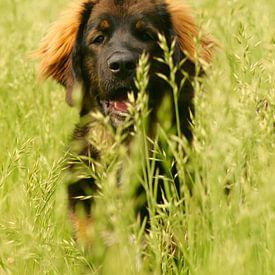 Happy Dog!  van Lisa-Valerie Gerritsen