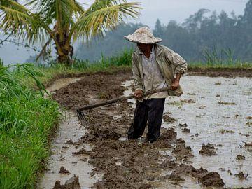 Rijstveld bewerken sur Bob de Bruin