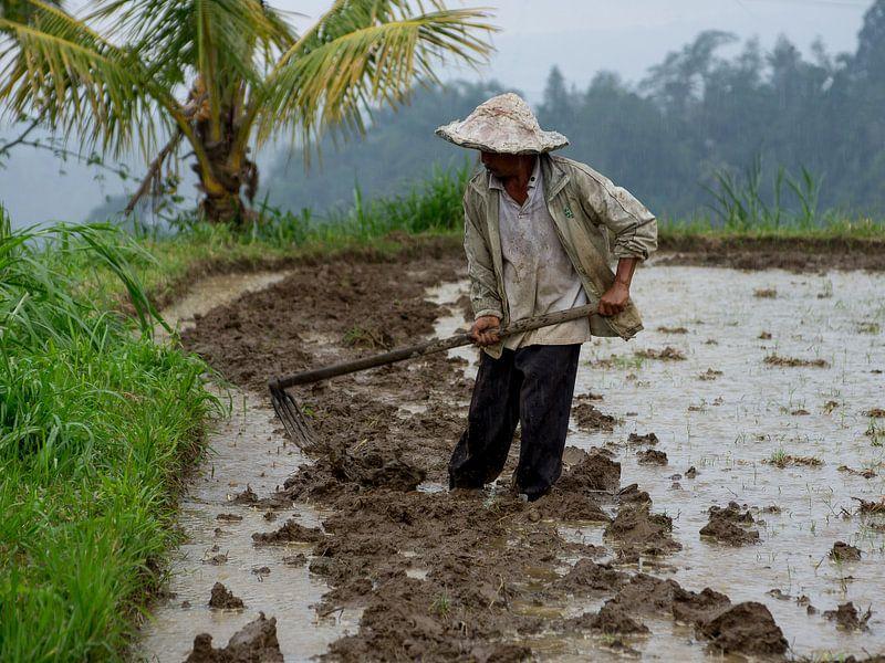 Rijstveld bewerken van Bob de Bruin