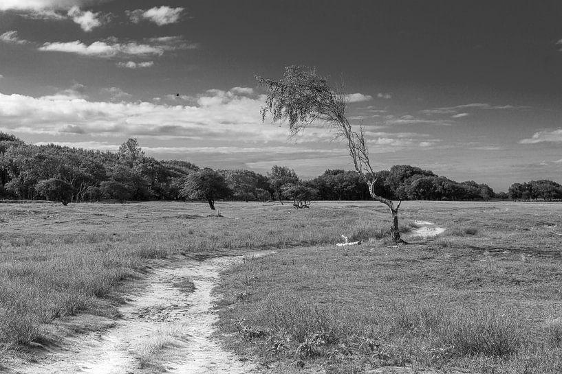 Weg zum Paradies von Lili's Photography