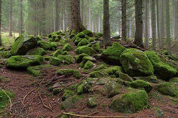 Herfst in het bos sur Wim Slootweg