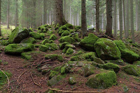 Herfst in het bos van Wim Slootweg