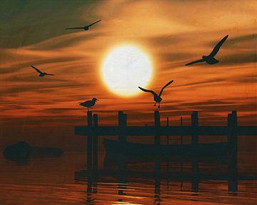 Meeuwen bij zonsondergang 4