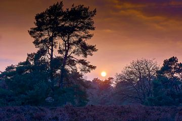Sonnenuntergang auf der Heide von Martijn Verhagen