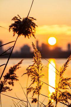 Zonnige Zonsondergang Skyline Rotterdam