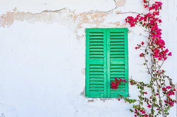 De achtergrond van de huismuur met gesloten groene vensterluiken, bougainville van Alex Winter